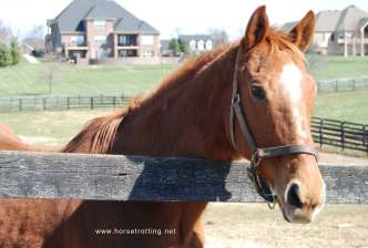 old friends rescuehorse