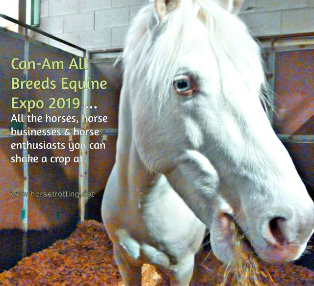 Can-Am All Breeds Equine Expo 2019 horse www.horsetrotting.net