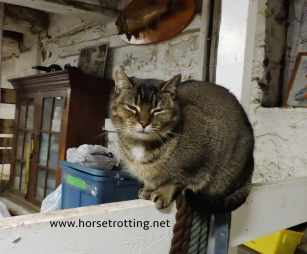 primrose donkey sanctuary barn cat