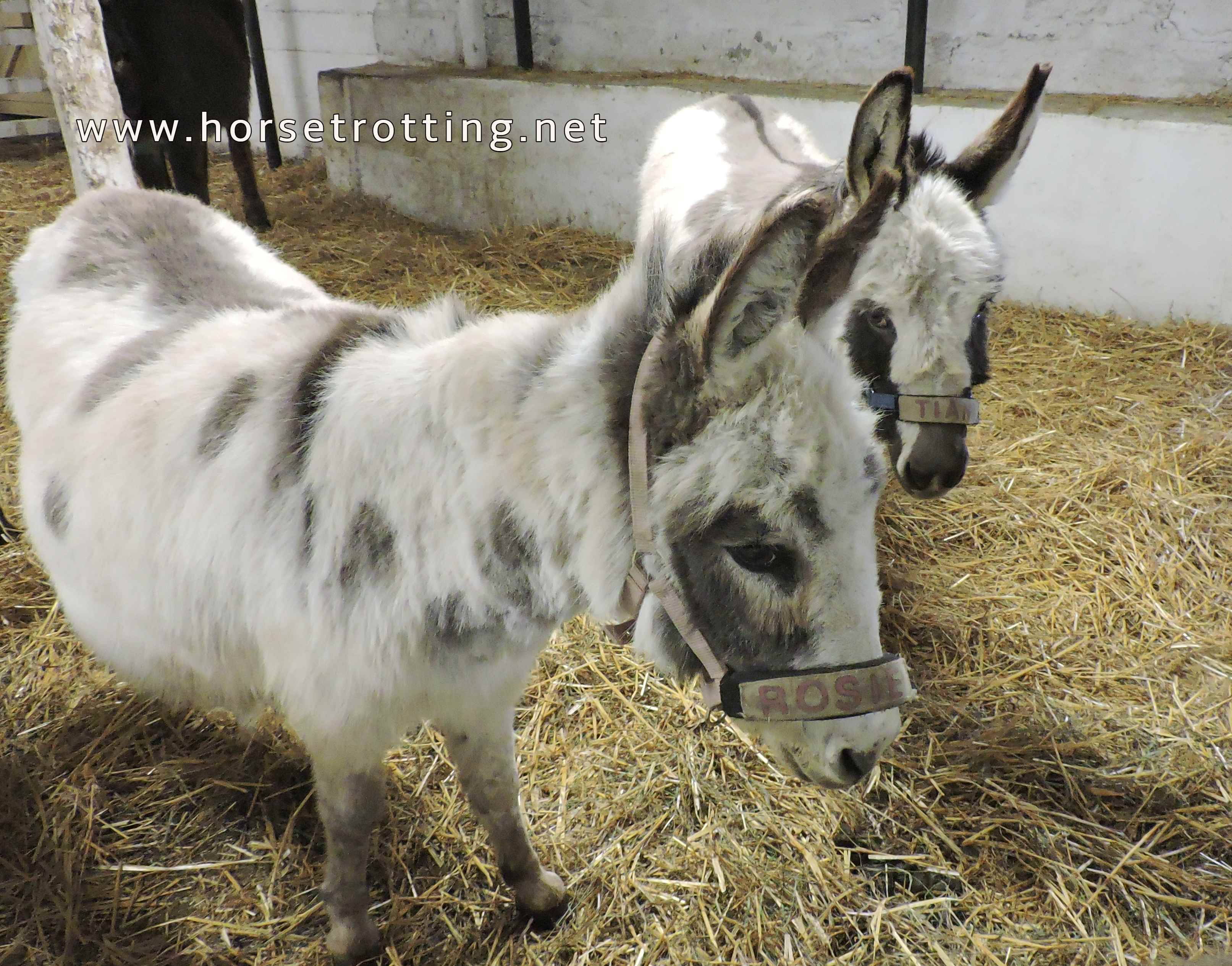 donkeys at PrimRose Donkey Sanctuary, Canada