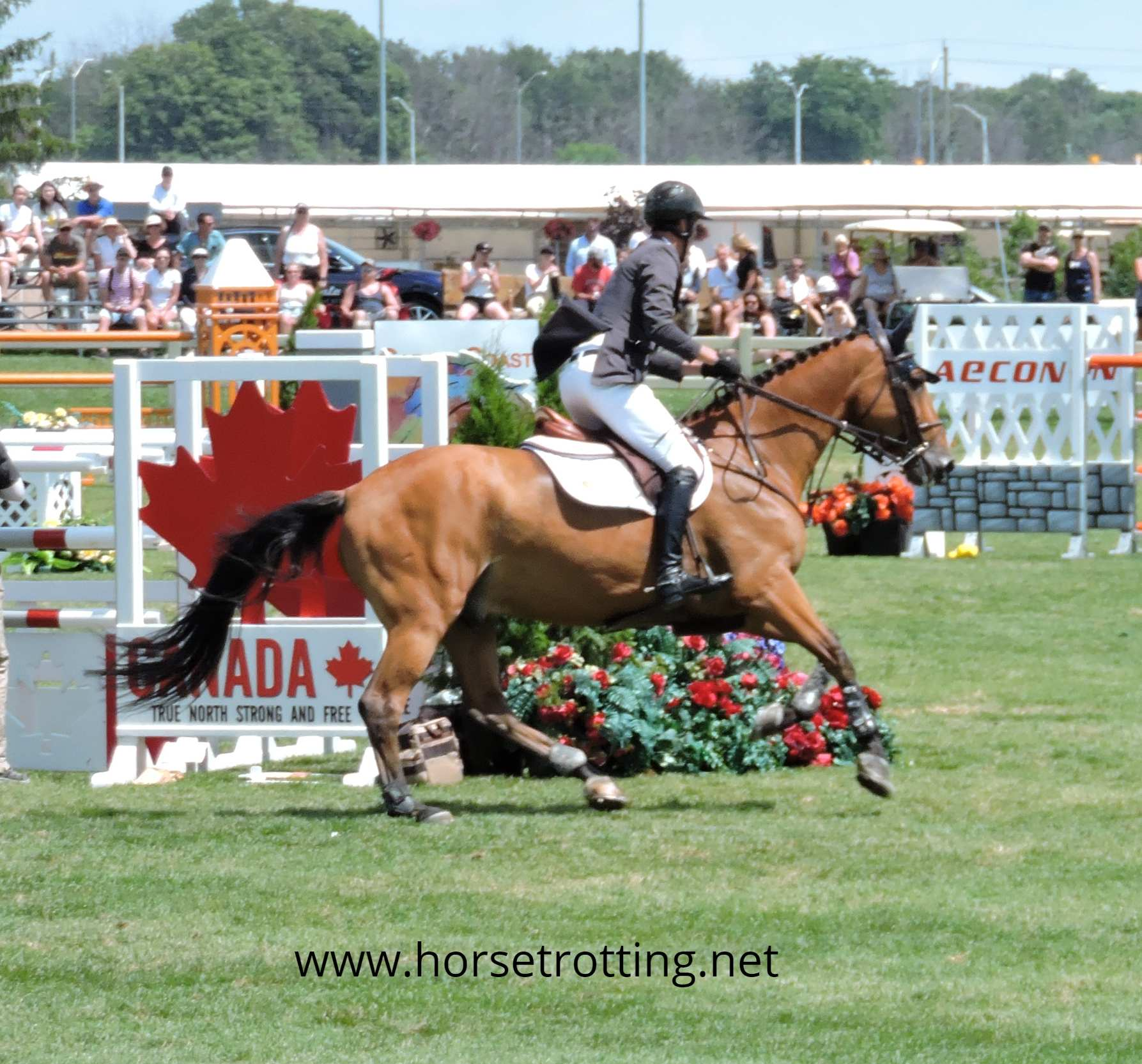 Global Travel for Horse Lovers | Travel, Trail Riding and