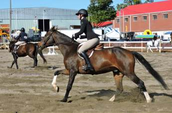 equestrian riding competition with horses at norfolk county fair 2019
