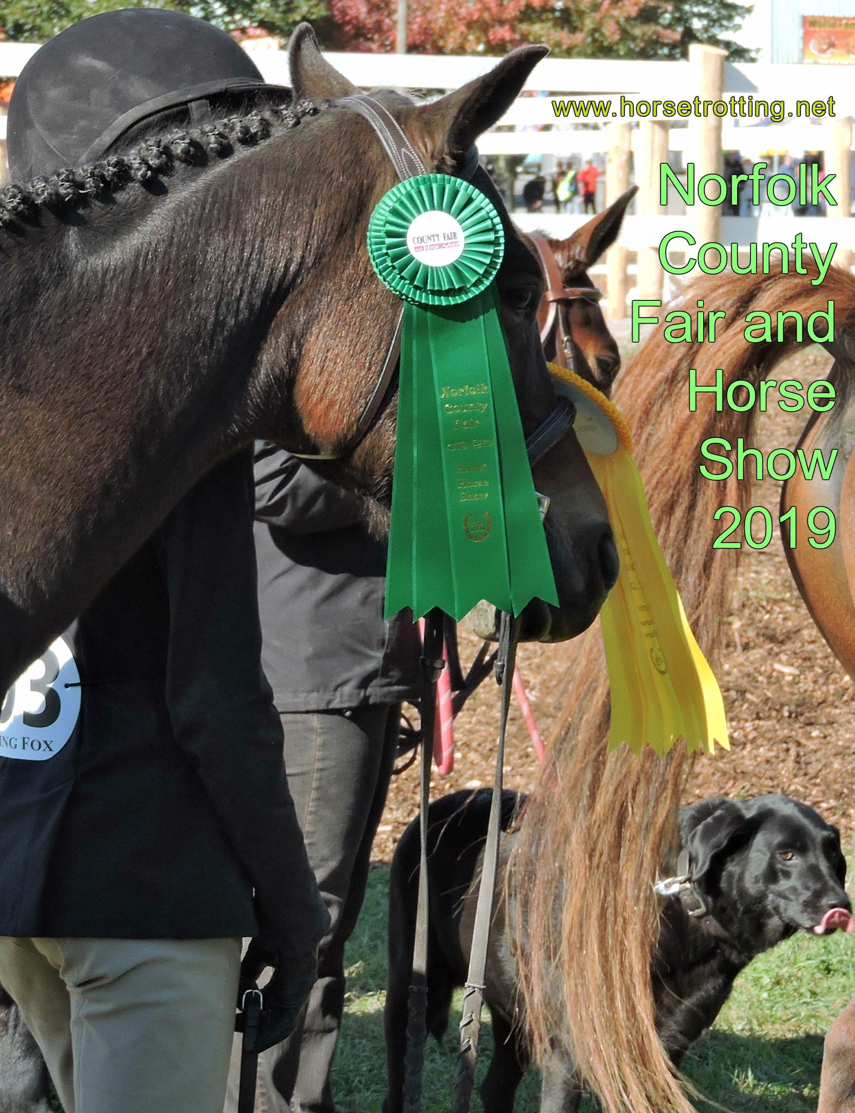 Travel Simcoe, ON: Norfolk County Fair and Horse Show in full stride